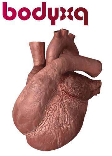 BodyXQ-cuore